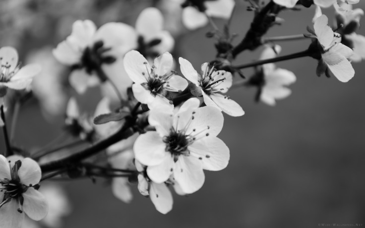 spring-flowers-_black-and-white-3840x2400-wide-wallpapers.net.jpg